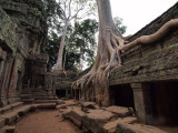 FIG TREE ROOTS ON TA PROHM TEMPLE