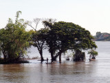 FLOODED  BANKS OF THE MEKONG RIVER