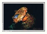 208   Black rockfish (Sebastes melanops), shipwreck Vanlene, Austin Island, Barkley Sound