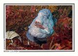 216   Wolf-eel (Anarrhichthys ocellatus), Crocker Rock, Queen Charlotte Strait
