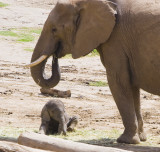 San Diego Safari Park 11.06.2011