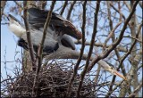 Heron in the Nest