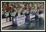 Flowered Sluice