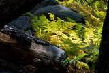 Cub Lake Trail 4