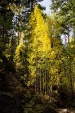 Cub Lake Trail 9