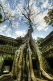 120103 Angkor 132_3_4_1.jpg