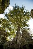 120103 Angkor 217_1.jpg