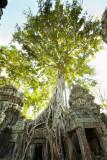 120103 Angkor 227-1.jpg