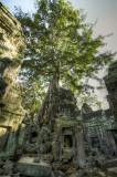 120103 Angkor 234_5_6.jpg