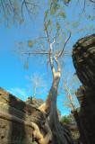 120103 Angkor 238-240.jpg