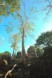 120103 Angkor 251-253.jpg
