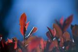 7-365 120615 F2 Japanese Garden Ipswich 008_1 sm.jpg