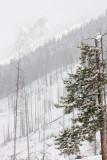 20110301_Banff_0023.jpg