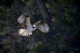 Birds 2011