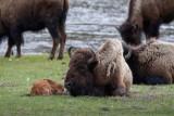 20110516_Yellowstone_0077.jpg