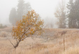 20111019_AlbertaBC_0160.jpg