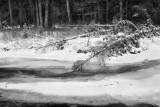 20111124_Banff_0018.jpg