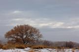 20111213_Bosque_0150.jpg