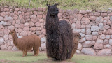 20120519_Cuzco_0042.jpg