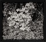 Black and White & Monochrome