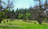 Old Apple Orchard May 2011