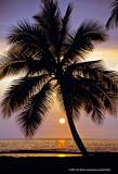 Hawaii_0073-copy.jpg