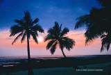 Hawaii_0460a-copy.jpg