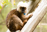 Madagascar-1070.jpg