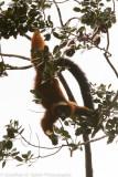 Madagascar-1307.jpg