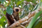 Madagascar-1398.jpg