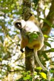 Madagascar-147.jpg