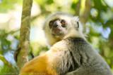 Madagascar-166.jpg
