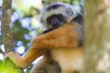 Madagascar-192.jpg