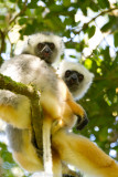 Madagascar-218.jpg