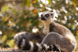 Madagascar-2213.jpg