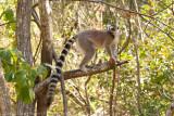 Madagascar-2234.jpg