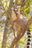 Madagascar-2276.jpg