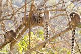 Madagascar-2343.jpg