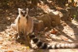 Madagascar-2355.jpg