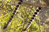 Madagascar-2365.jpg