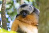 Madagascar-254.jpg