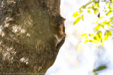 Madagascar-2709.jpg