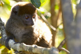 Madagascar-315.jpg