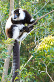 Madagascar-332.jpg