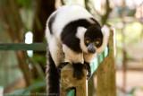 Madagascar-956.jpg