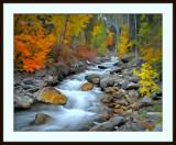 Painted Fall stream.jpg