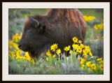 Painted buffalo and yellow flowers