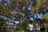 Mansions and Oaks - Beaufort, South Carolina