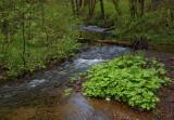 Keller Creek - Yachats Oregon