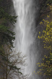 Multnomah Falls - Columbia Gorge, OR